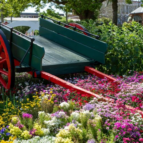 Toowoomba-carnival-of-flowers (10)