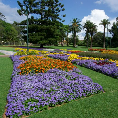 Toowoomba-carnival-of-flowers (8)